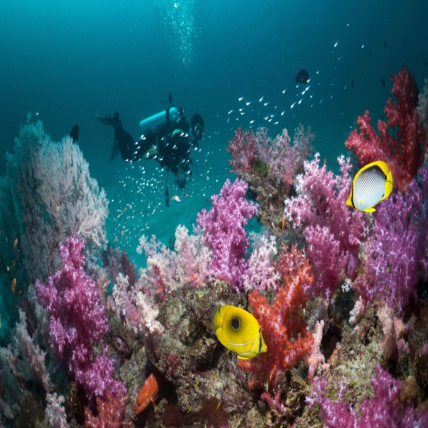 Guided Havelock Scuba Diving With Photography